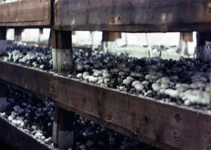 Dohme Pilze